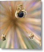 Allium Lucille Ball Seedpod Metal Print
