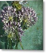Allium Wildflower With Grunge Textures Metal Print