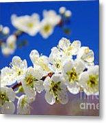 Almond Blossom Metal Print by Carlos Caetano