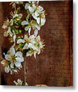 Almond Blossom Metal Print by Marco Oliveira