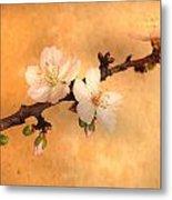 Almond Flowers Metal Print