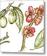 Almond With Flowers Metal Print