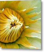 Almost Metal Print by Karen Walzer