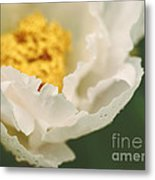 Almost White Metal Print