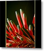 Aloe Bloom Window 2 Metal Print