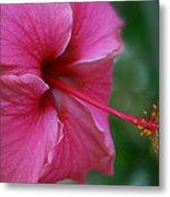 Aloha Aloalo Ulu Wehi Pink Tropical Hibiscus Wilipohaku Hawaii Metal Print