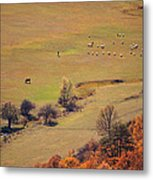 Alone Betwin Animals  Metal Print