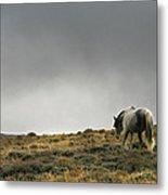 Alone - Wild Horse - Green Mountain - Wyoming Metal Print