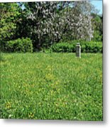 Alone In A Field Of Buttercups Metal Print