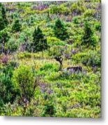 Alone In Grizzly Country Metal Print