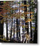 Alone In The Mist Metal Print
