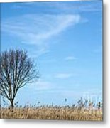 Alone Tree In The Reeds Metal Print