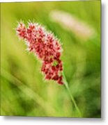 Alone With The Wind Metal Print