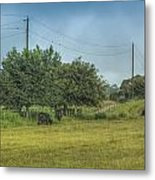 Along A Rural Road Metal Print