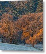 Along Miwok Trail In Winter Metal Print