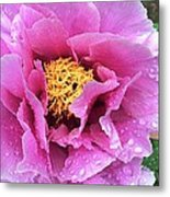 Along Orchard Metal Print