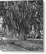 Along The River Road Near Vacherie La Metal Print