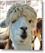 Alpaca Hair Do Metal Print