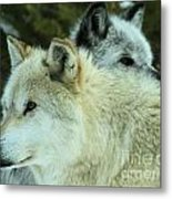 Alpha In The Background Metal Print
