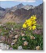 Alpine Flowers Metal Print