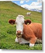 Alpine Pasture With Cow Metal Print