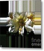 Alstroemeria Named Marilene Staprilene Metal Print