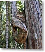 Altered Tree Trunk Growth Metal Print