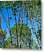 Alternate Reality - Reflected View Of The Forest From A Pond In Garland Ranch Park In Carmel Valley. Metal Print