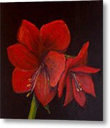 Amaryllis On Black Metal Print