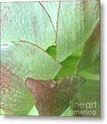 Amaryllis Petals Metal Print
