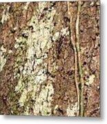 Amazon Ant Metal Print