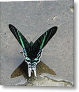 Amazon Butterfly 3 Metal Print