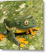Amazon Leaf Frog Metal Print