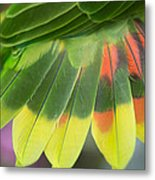 Amazon Parrots Feathers Abstract Metal Print