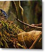Amazon Tree Boa Metal Print