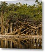 Amazon Trees Metal Print
