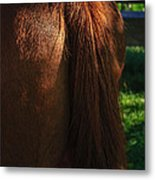 Amber Horse Tail Metal Print