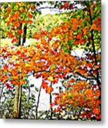 Amber Leaves  Metal Print by Dianne  Lacourciere