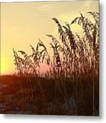 Amber Waves Of Oats Metal Print