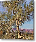 Amboy Shoe Tree By Diana Sainz Metal Print