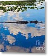 American Alligator Swimming Through The Clouds Metal Print