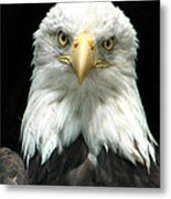 American Bald Eagle 2 Metal Print