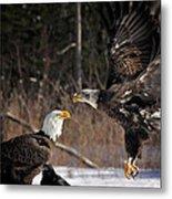 American Bald Eagles Metal Print