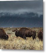 American Bison On The Prairie Metal Print
