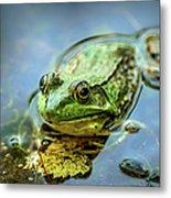 American Bull Frog Metal Print
