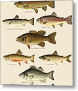 American Game Fish Metal Print