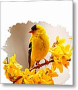 American Goldfinch Branch Of Forsythia Metal Print