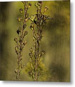 American Goldfinch Eating Seeds Metal Print