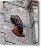 American Kestrel Perched On The Side Of A Building Metal Print
