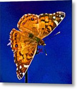 American Lady Butterfly Blue Square Metal Print
